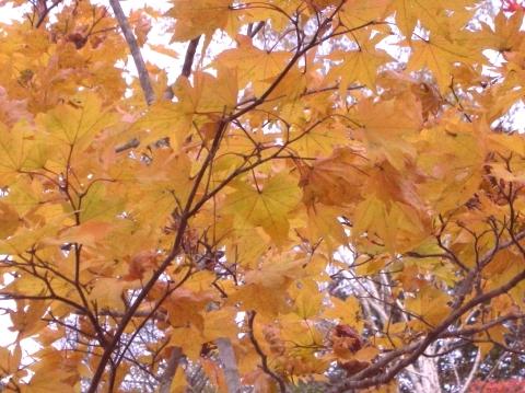 2010年10月11日然別峡オフ会福原山荘7