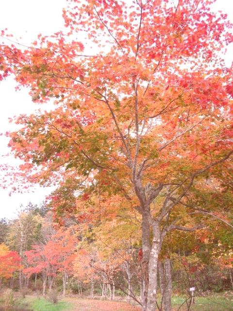 2010年10月11日然別峡オフ会福原山荘8