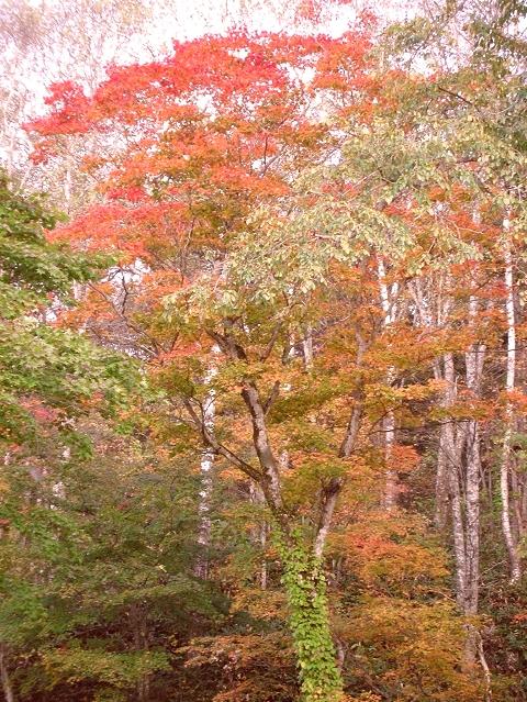2010年10月11日然別峡オフ会福原山荘12