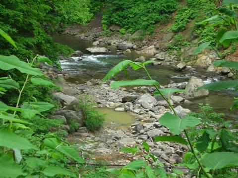 2010年6月 見市川の湯4