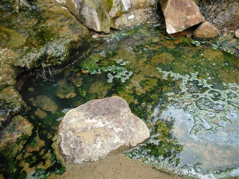 2010年6月 見市川の湯9