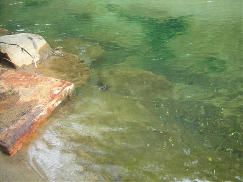 2010年6月 見市川の湯14