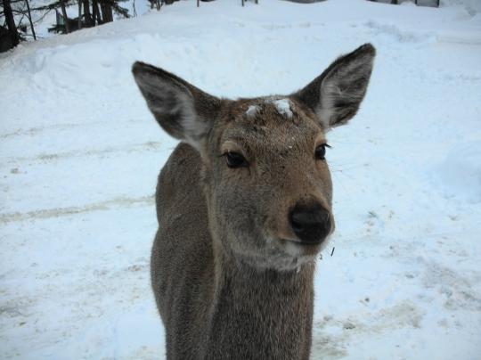 2010年秘湯研究会 鹿の谷編①