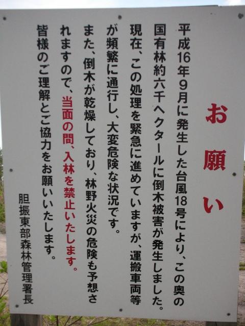 10年5月30日たらの芽取り4