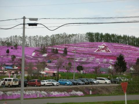 東藻琴芝桜まつり1