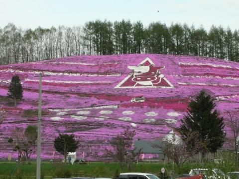東藻琴芝桜まつり2