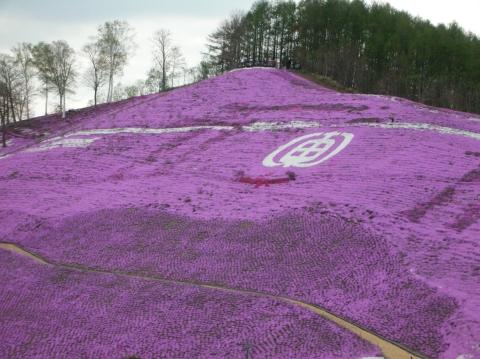 東藻琴芝桜まつり3