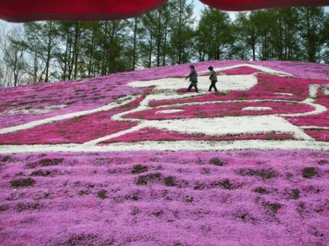 東藻琴芝桜まつり4