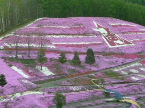 東藻琴芝桜まつり10