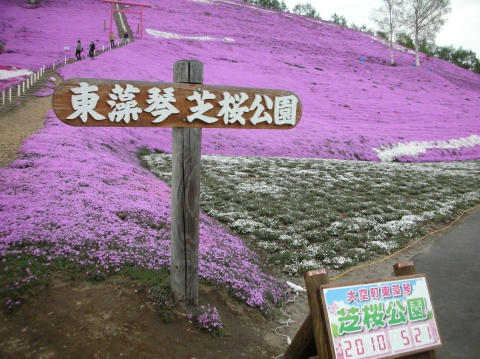 東藻琴芝桜まつり13