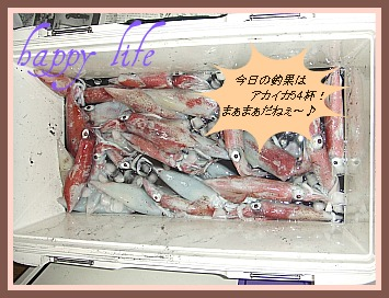 アカイカ釣果 2011,7.24