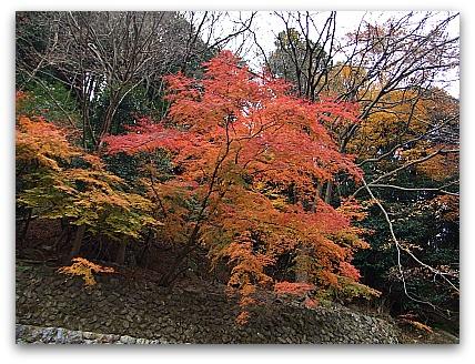 嵐山 保津川下り 紅葉