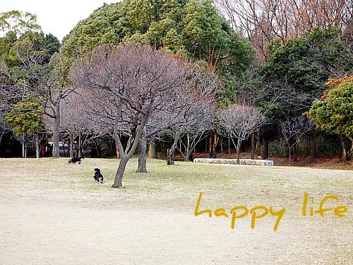 2012_010920100269.jpg