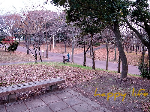 2012_010920100294.jpg