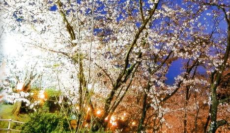 正福寺山公園