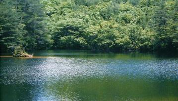 福富町のクロボヤ峡