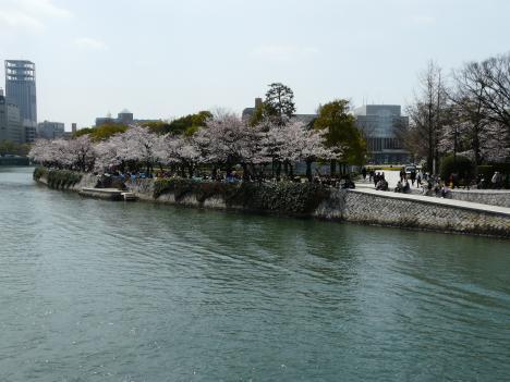 元安橋から見た桜 その1