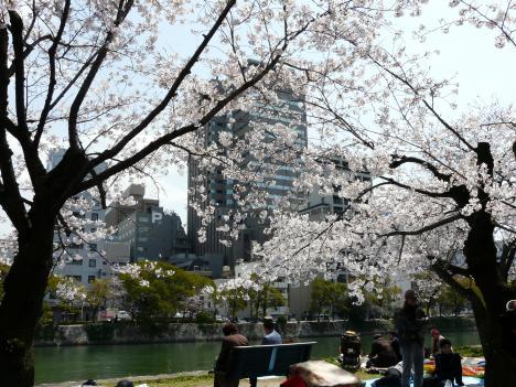 桜と近代建物のコラボ