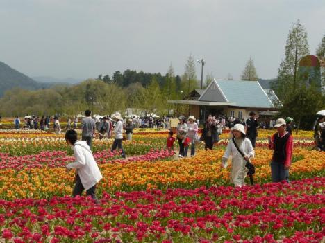 世良高原農場 チューリップ祭り 画像 その1