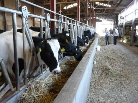 豊栄町 トムミルクファーム 育ち盛りの家 若牛達
