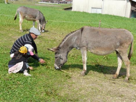 豊栄町 トムミルクファーム 放牧場のロバさん