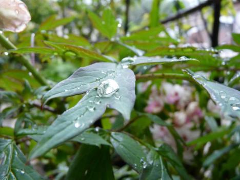 悠太郎の庭木 その2