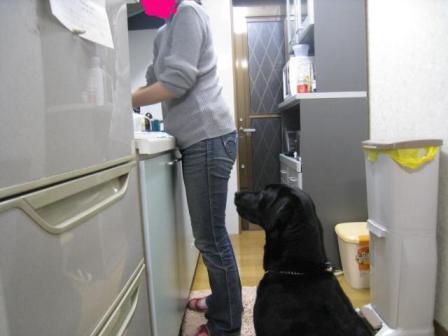台所に居座る