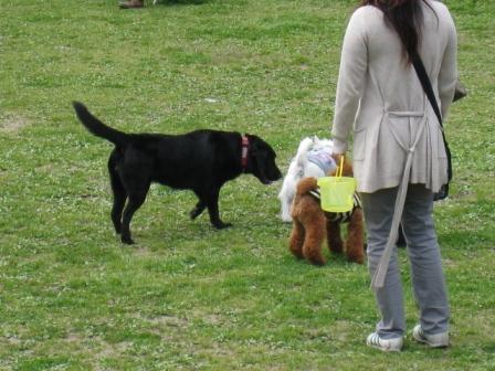 やっぱり小型犬が好き