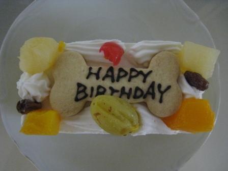 犬生初のケーキ
