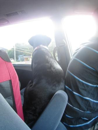 待ち犬を待つ犬