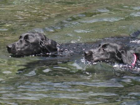 兄妹の泳ぎ