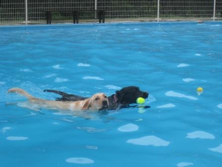 仲良く泳ぐ