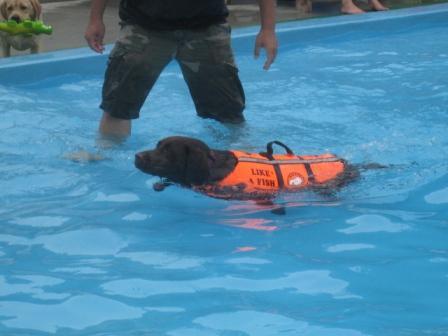 泳げるかしら・・・