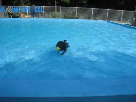 今日も泳ぐよ