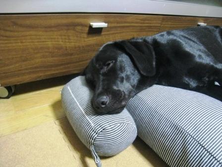 贅沢な寝方