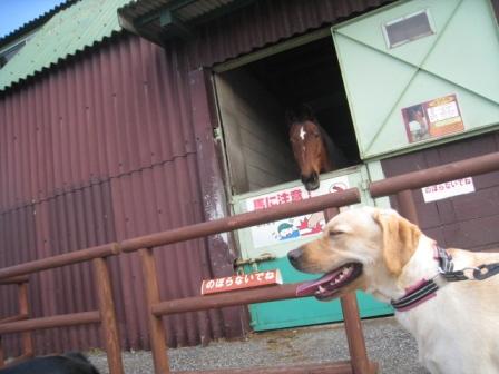 麻衣ちゃんと馬