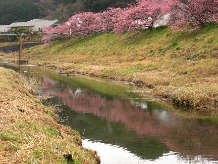 南伊豆・青野川