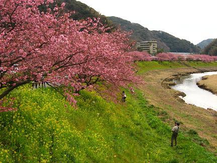 南伊豆・青野川 3