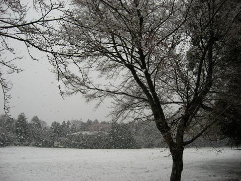 春の雪 2