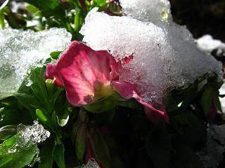 雪の布団は重い