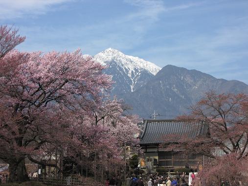 実相寺・山高神代桜