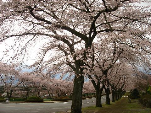 富士霊園 2