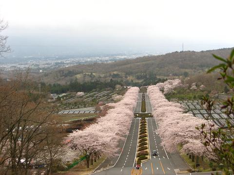 富士霊園 4