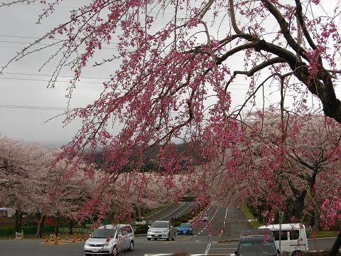 富士霊園 5