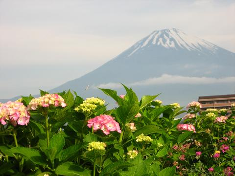 梅雨の中休みと富士山