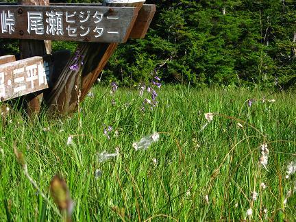 湿原の花々
