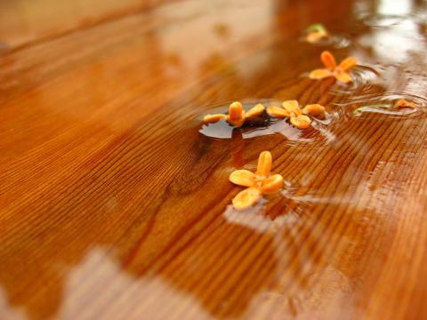 雨に散った金木犀 2