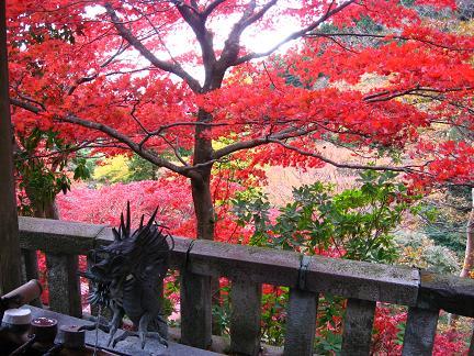 大山寺の紅葉 2