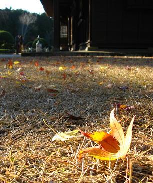 秩父宮記念公園にて ゆく秋をおしむ