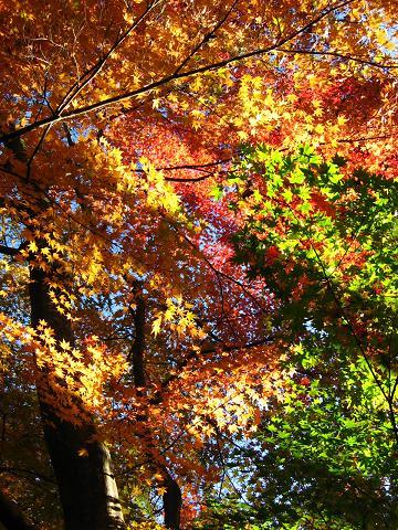 秩父宮記念公園の紅葉
